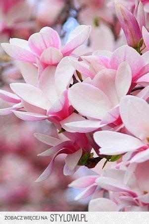 Las flores y plantas tienen su lenguaje y significado que