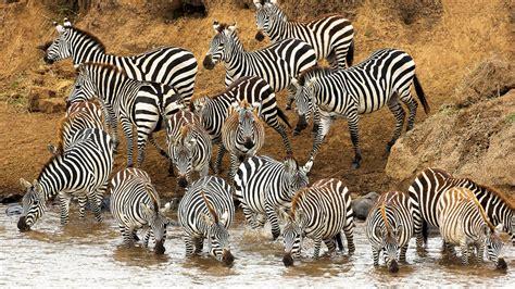 fantastic hd animal herd wallpapers
