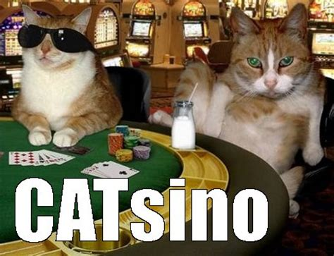 Funny Casino Memes - real money online casino games thrill fun rewards and benefits online image 3823311 by