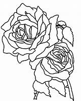 Coloring Roses Flower Pages sketch template