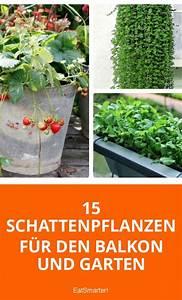 Blumen Für Schattigen Balkon : 15 schattenpflanzen f r balkon und garten gr ne beete der gartenblog auf eat smarter ~ Orissabook.com Haus und Dekorationen