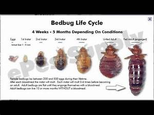 bed bugs calgary canada bridlewood bedbug expert advice With bed bugs calgary