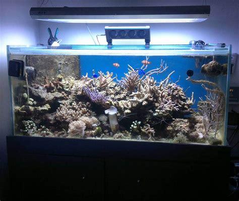 aquarium eau de mer complet pas cher aquarium d eau de mer pas cher 28 images superbe aquarium eau de mer ou eau douce pas cher