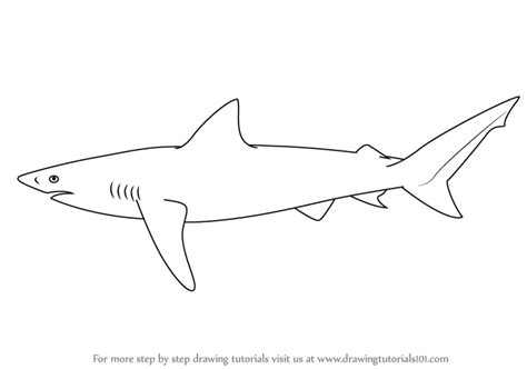 learn   draw  copper shark fishes step  step