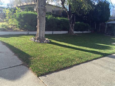 artificial grass front yard synthetic lawn buckeye arizona gardeners front yard ideas
