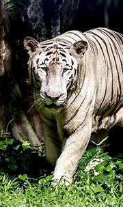Photo taken with Canon EOS 6D - Animal - YouPic | White ...