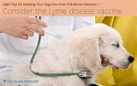 Eight Tips for Keeping Your Dog Free From Tick-Borne ...