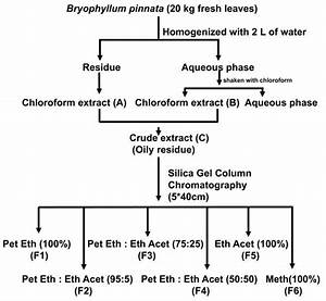 Flow Chart Of Extraction And Column Chromatographic Separation Of