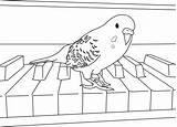 Parakeet Coloring Pages Budgies Bird Parakeets Cockatiel Colouring Birds Easy Cool Clarabelle Animal Happy Birthday Books Paper Reference sketch template