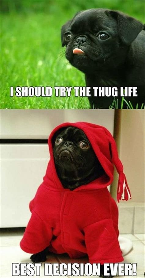sweet  funny animal pictures     day cute funny animals funny dog