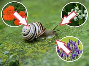 Welche Pflanzen Gegen Wespen : pflanzen gegen schnecken ~ Lizthompson.info Haus und Dekorationen