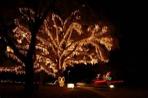 Holiday Festival Of Lights Honored – The Island Connection