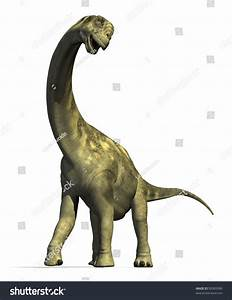 Camarasaurus Dinosaur Lived North America During Stock