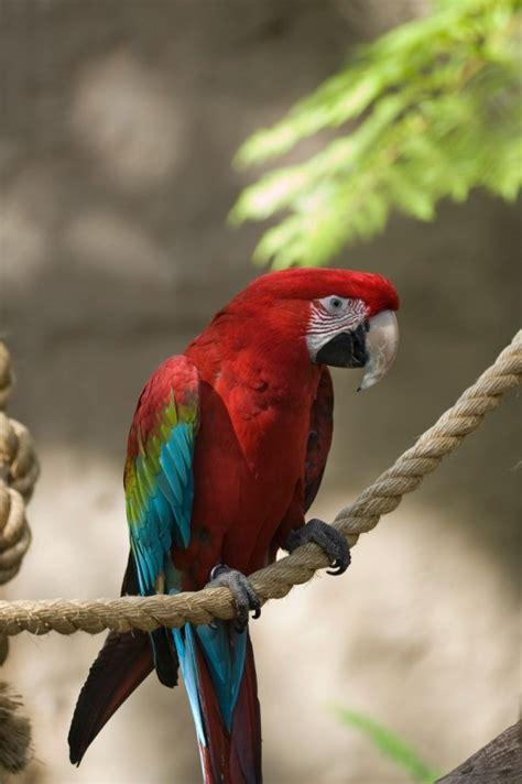 understanding  birds body language thriftyfun