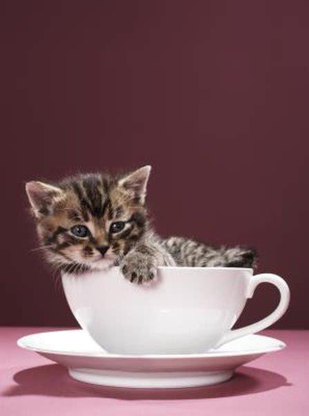 typical habits  newborn kittens pets