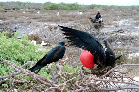 7 life lessons that the birds of galapagos have taught me
