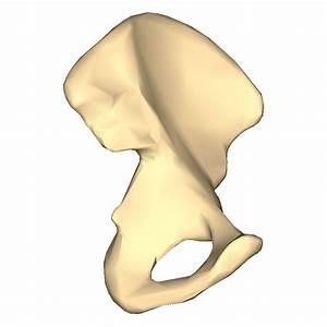 File Hip Bone - Close-up