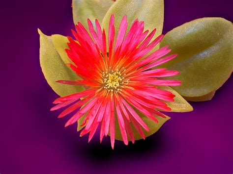 types flowers flower types