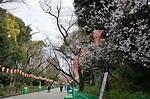 日本東京賞櫻景點名所:上野公園櫻花行程交通,更新2017櫻花開花滿開時間 - Banbi 斑比美食旅遊