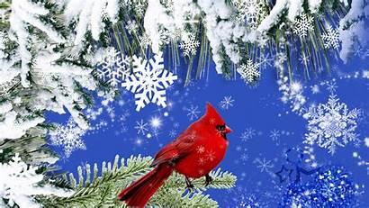 Cardinal Winter 1080p Resolution 1080 Wallpapers 1920