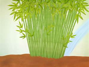 How To Plant A Clumping Bamboo  13 Steps  With Pictures