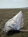 嚇死人 這麼大條地震魚! 蘋果新聞網 蘋果日報