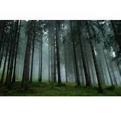 Landscape Nature Forest Mist Trees Grass Pine