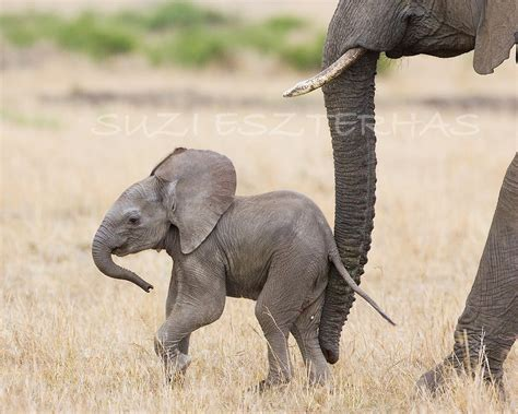 50% Off Sale Baby Elephant Photo Print African Safari Baby