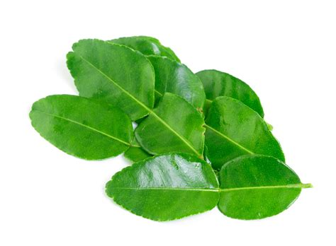 lime leaves 13 health benefits of kaffir lime leaves no 2 is impressive dr heben