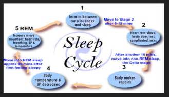 Psychology Stages of Sleep Cycle