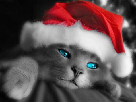 funny animals cute christmas animals
