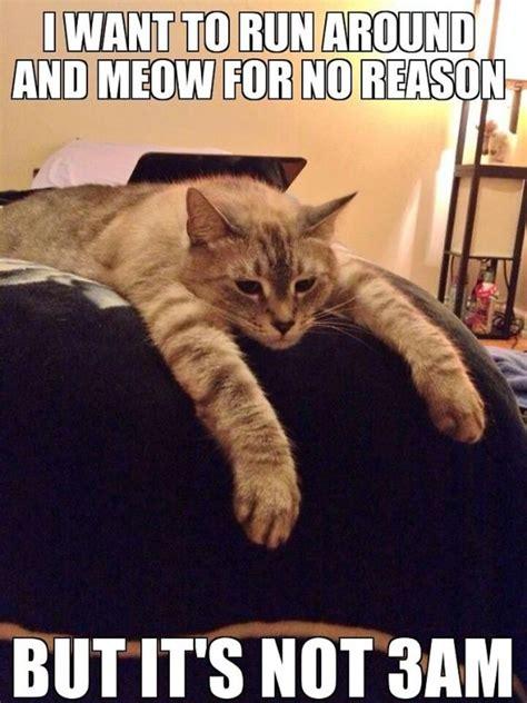 hilarious sad cat problems   explain