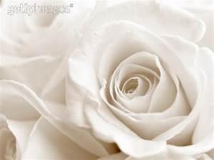 Fleur Rose Et Blanche : ma belle fleur blanche ~ Dallasstarsshop.com Idées de Décoration