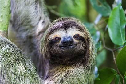 Rainforest Animal Habitats