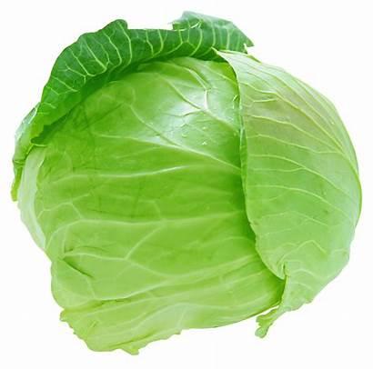 Cabbage Fresh Clipart Vegetables Transparent Yopriceville Previous