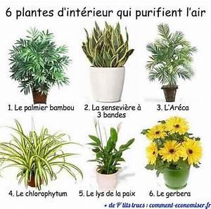 Acheter Des Plantes : 6 plantes d 39 int rieur qui purifient l 39 air ~ Melissatoandfro.com Idées de Décoration