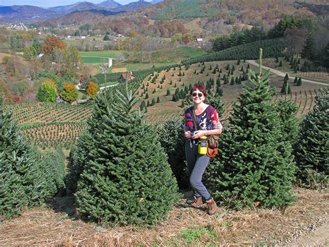 awesome picture of boyds christmas tree farm perfect