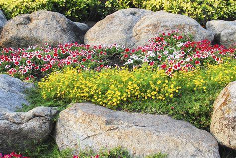 pflanzen zryd stein garten ag