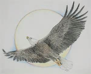 Soaring Eagle Drawings