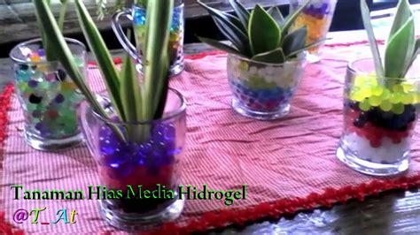 aneka tanaman hias hidup media tanah kompos