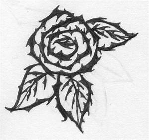 Drawn rose rose thorn - Pencil and in color drawn rose ...