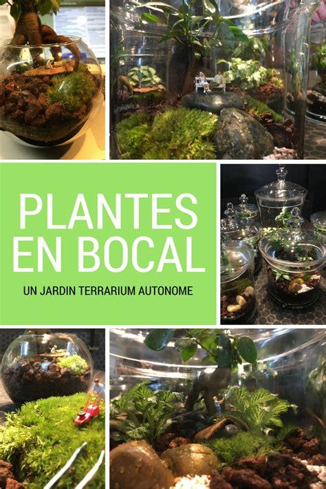 Jardin Sous Verre by Un Terrarium De Plantes Pour Un Jardin En Bocal En