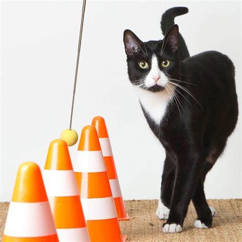Clickertraining Katze übungen