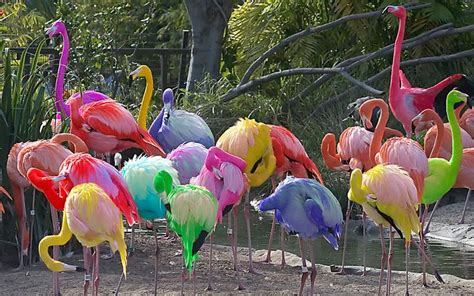 what color is a flamingo michael friedman flamingos he states that most