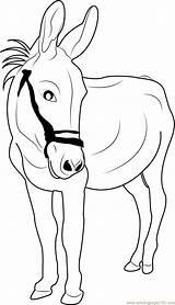 Donkey Coloring Looking Printable Marvelous Sheets Cartoon Coloringpages101 Balaam Adult Shrek Talking Animals sketch template