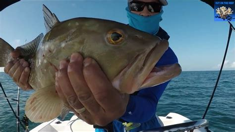 gulf fishing mexico grouper reef clearwater