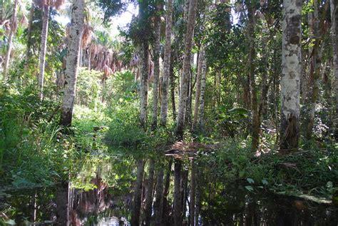 rainforest amazon swamp flickr mlinaric ivan brazil map
