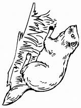 Beaver Coloring Printable Animal Animals Mycoloring Recommended sketch template