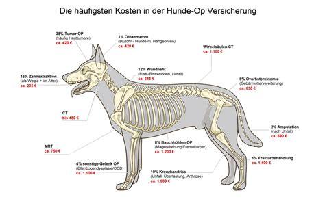 uelzener hundeversicherung hundeversicherung blog