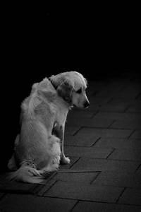 Alone,sad,friend,dog,animal - free photo from needpix.com  Sad